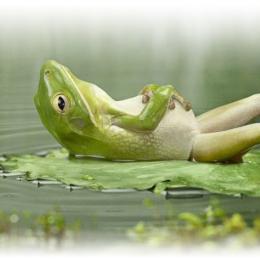 lazy Sunday Frog